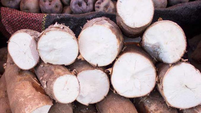 yuca vs tapioca